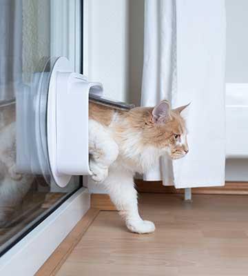 Dimensions de la chatière
