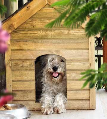 Le chien et sa niche