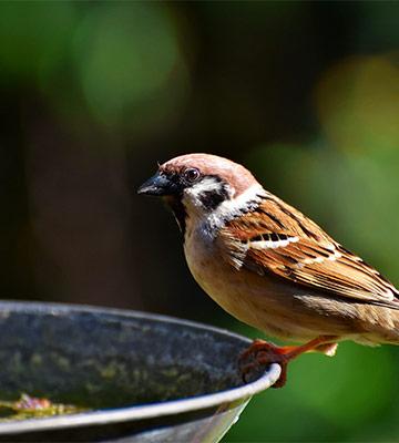 abrevoir oiseaux