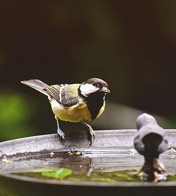 bassin oiseaux