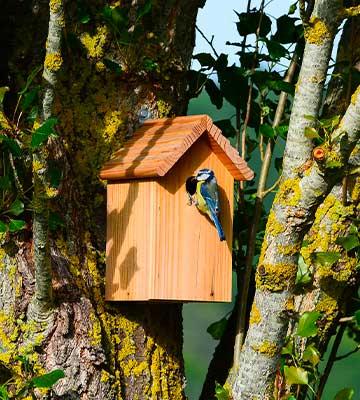 La cabane bois oiseaux jardin