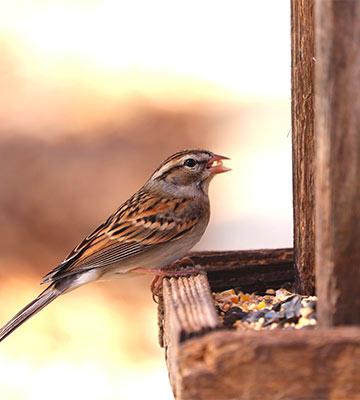 Mangeoire oiseaux jardin
