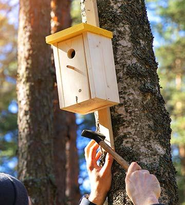 Pour fixer une cabane à oiseaux