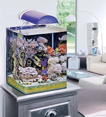aquarium nano récifal déubtant