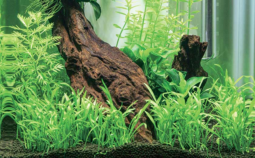 décor d'aquarium végétal