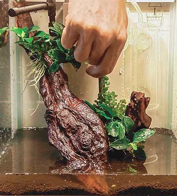 decor végétal aquarium