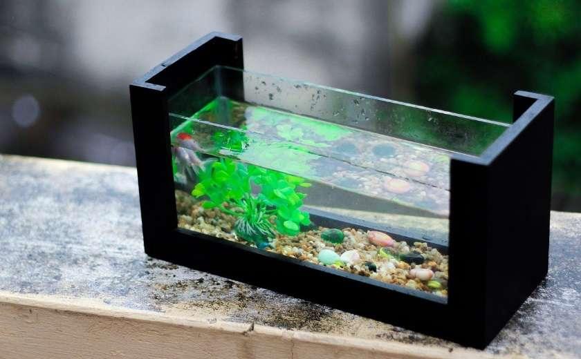 déplacer aquarium eau douce
