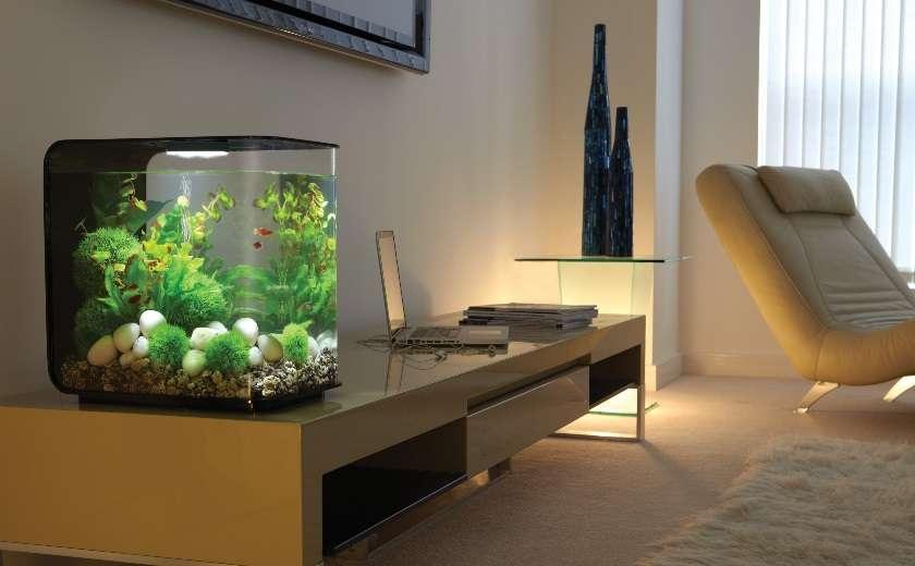 déménager nano aquarium