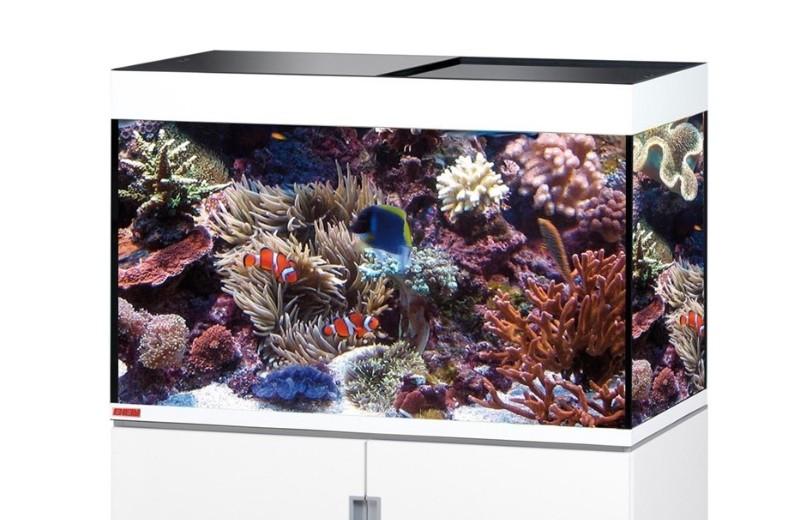 aquarium eau de mer amphiprion coraux poisson clown