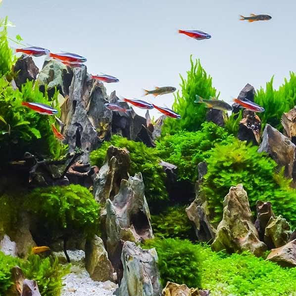 Les plantes dans votre quarium
