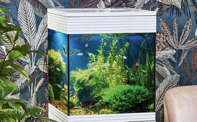 aquarium de petite taille