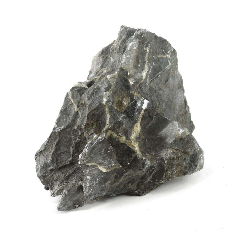 roches aquatium