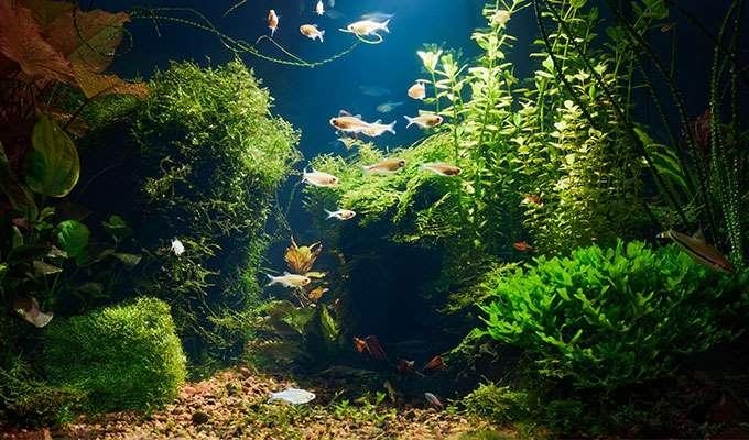 Aquarium décoré de plantes