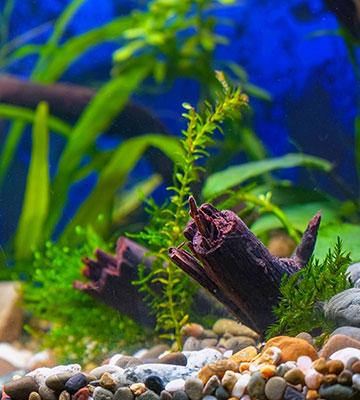 Mousse fixée aquarium