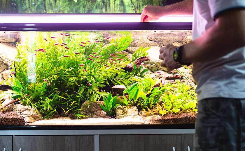 L'entretien de l'aquarium