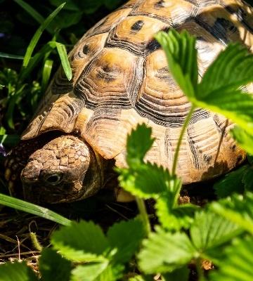 La tortue d'Hermann et la législation