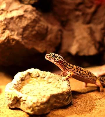 Un abreuvoir avec un reptile
