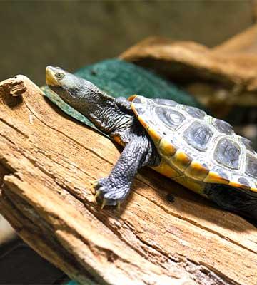 Une tortue sur un rocher