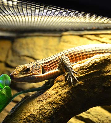 Lampe pour reptiles