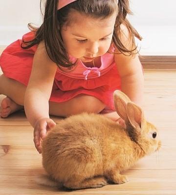 éducation du lapin nain