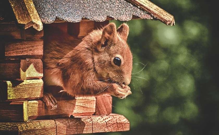 habitat nid écureil