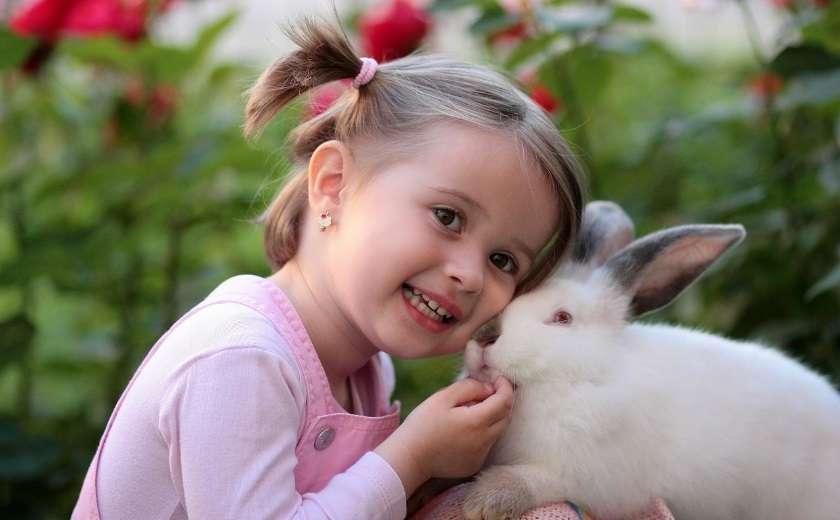 développer la complicité lapin