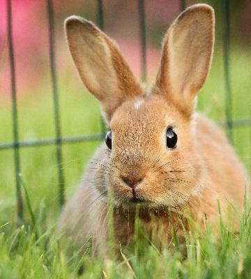 éducation du lapin