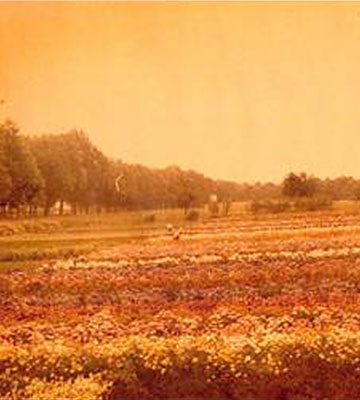 25 hectares de culture florale à Le Chesnay