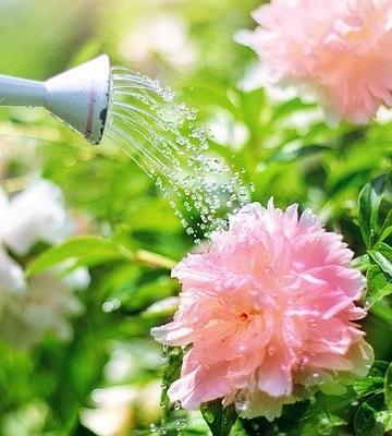 arrosage fleurs