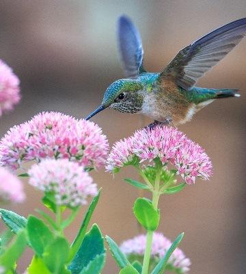 oiseaux fleurs