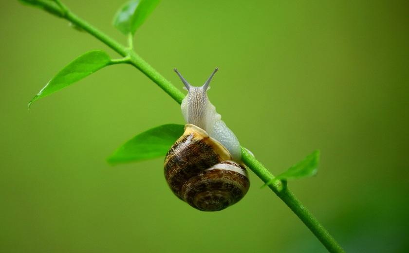 lutter contre les escargots