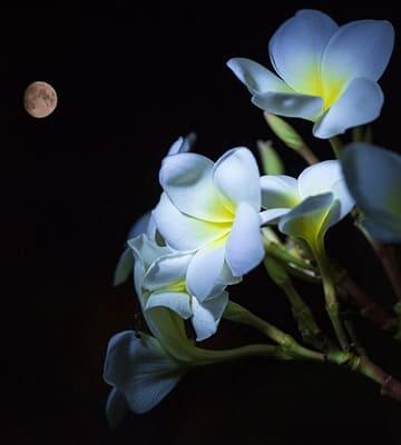 lune jardin