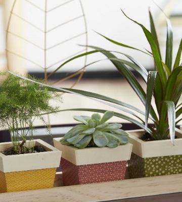 Plantes grasses de bureau