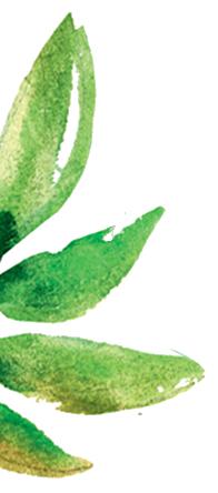 plante2