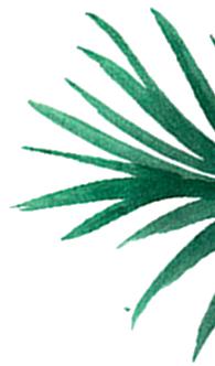 plante3
