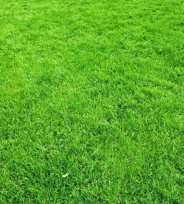 créer son jardin pelouse