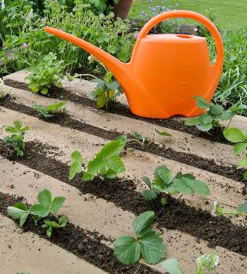 petits fruits planter en terre