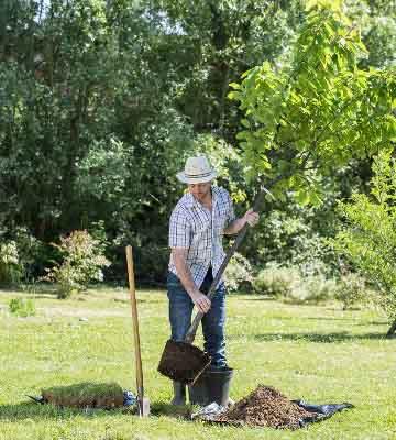 Preparation arbre frutier