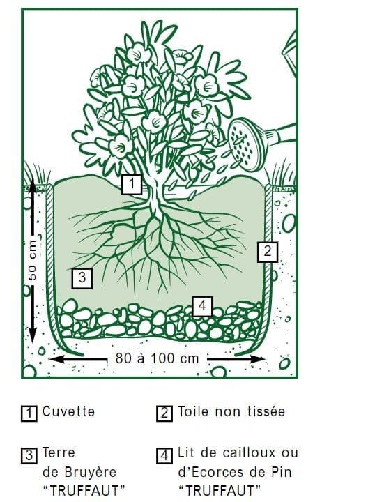 planter plantes de terre de bruyères