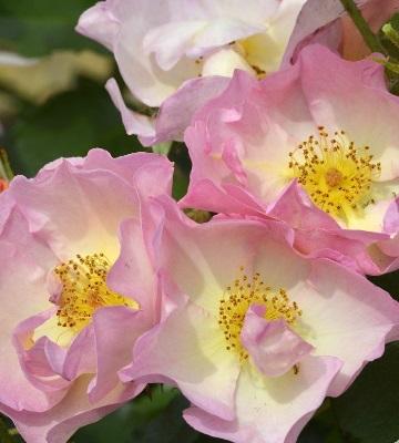 rosier lambert wilson