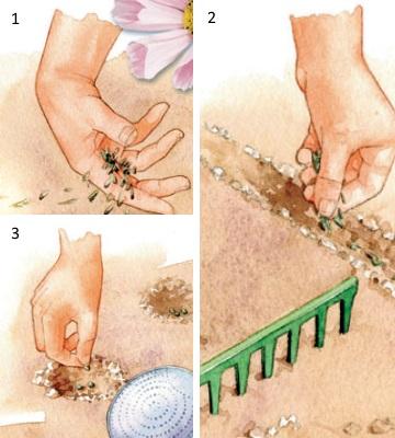 techniques de semis