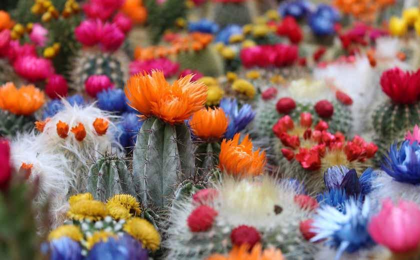 Quelles variete de cactus choisir ?