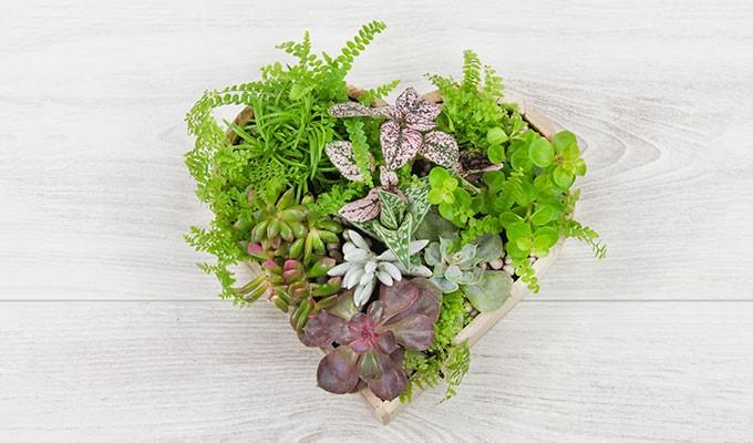 Composition de succulentes