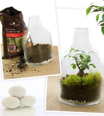 réalisation terrarium bouteille