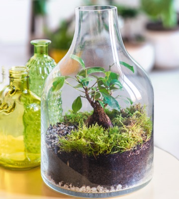 terrarium bouteille