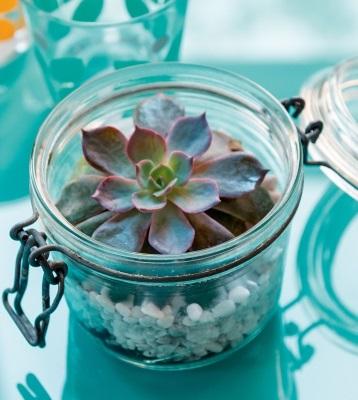 Terrarium bocal plantes grasses