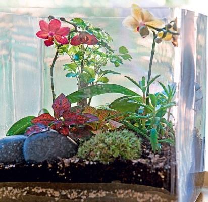 terrarium vegetal