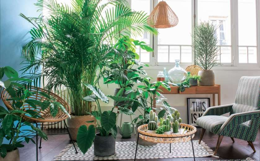 salon deco interieur jungle urbaine