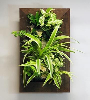 tableau végétal mur végétaliser