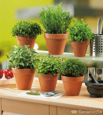 plantes aromatiques en cuisine